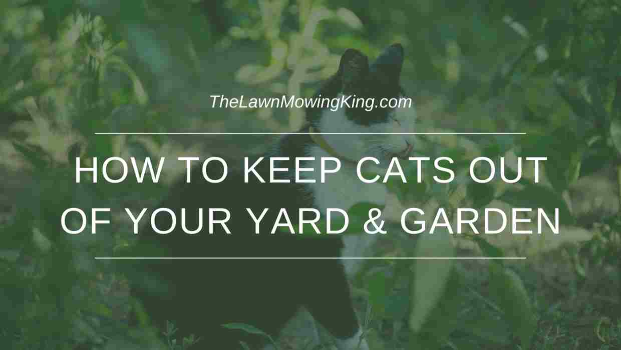 how to keep cats out of your yard & garden