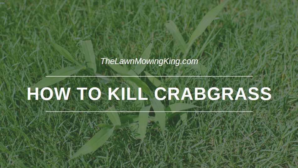 How to Kill Crabgrass