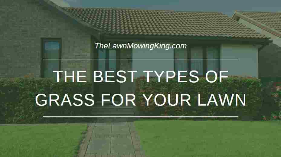 The Best Types of Grass for your lawn