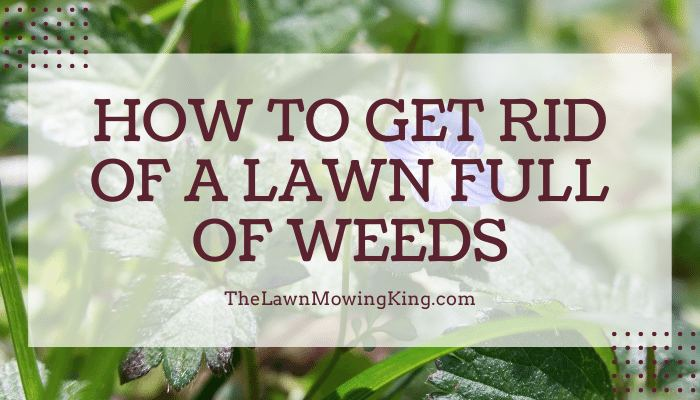 20 Fun Facts About How To Get Rid of Grass Full of Weeds