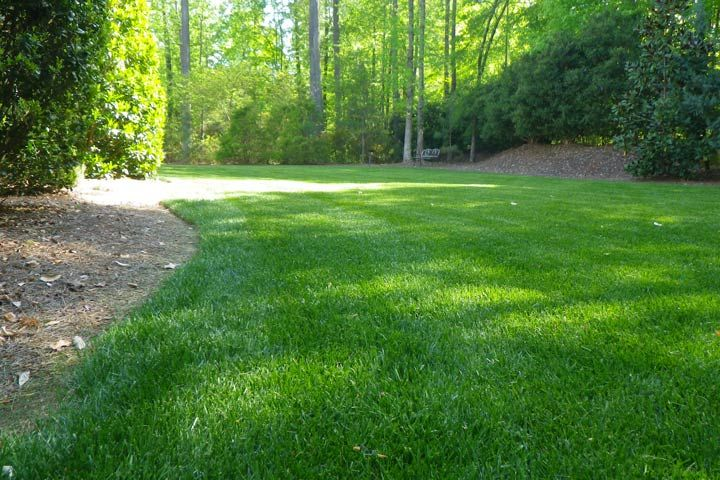 Fine Fesque Grass