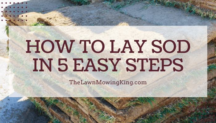 how to lay sod in 5 easy steps