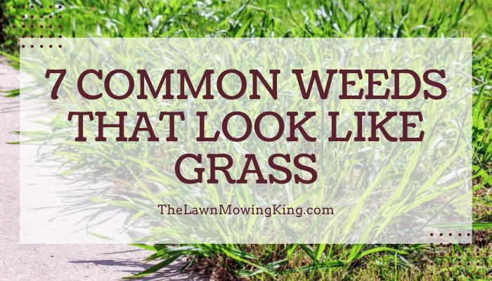 12 Stats About weed that looks like grass with long roots to Make You Look Smart Around the Water Cooler