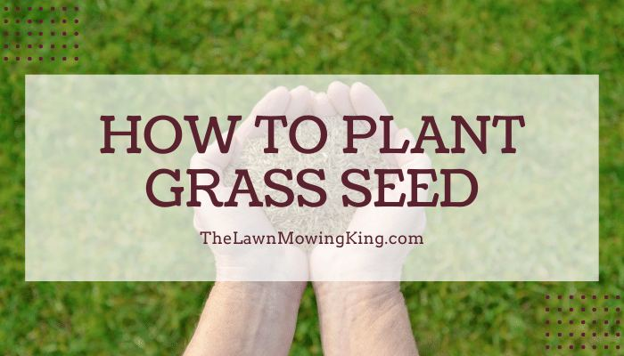 10 Startups That'll Change the How to Plant Grass Seeds Industry for the Better