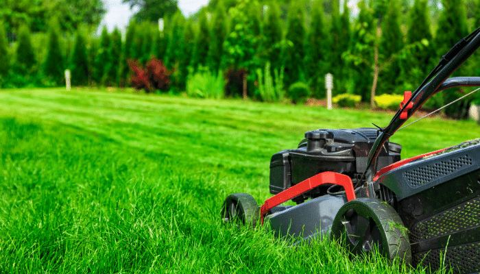 Mowing Lawn in Summer